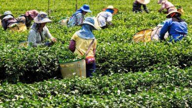 Photo of Reforma laboral dará seguridad social a trabajadores del campo